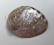 1pc Red abalone shell polished