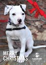 Christmas cards - Adoption Centre Dogs