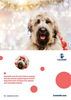 Christmas Cards - Lort Smith animals (pack of 12)