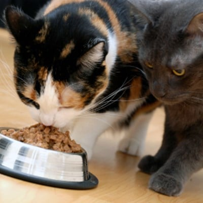 How To Control Food Intake For Multiple Cats