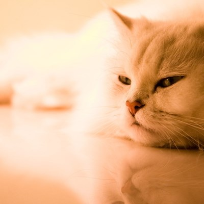8 Signs Of Boredom In Indoor Cats