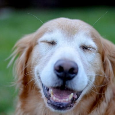 4 Ways to Know if Your Dog is Happy