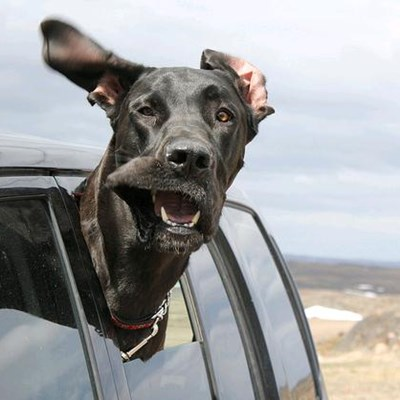 What To Do When Your Dog Is Afraid Of The Car