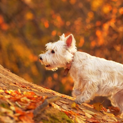 14 Things To Do To Prepare Your Dog For Fall