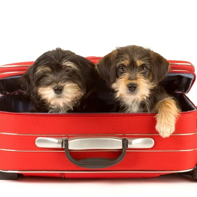 Tips For Traveling With Pets During The Holidays