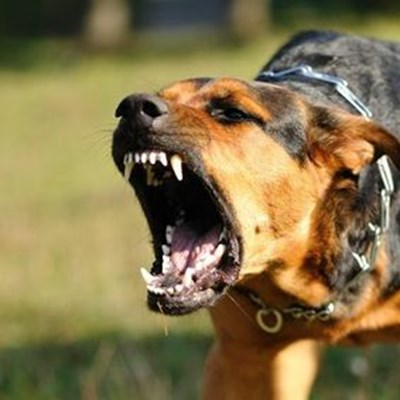 What to do if Your Dog Bites Another Dog