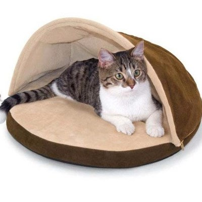 Why Your Cat Needs A Heated Bed This Fall