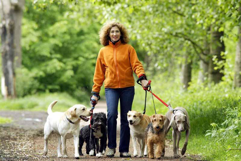 Strolling with the Pack: 6 Tips for Walking Two or More Dogs