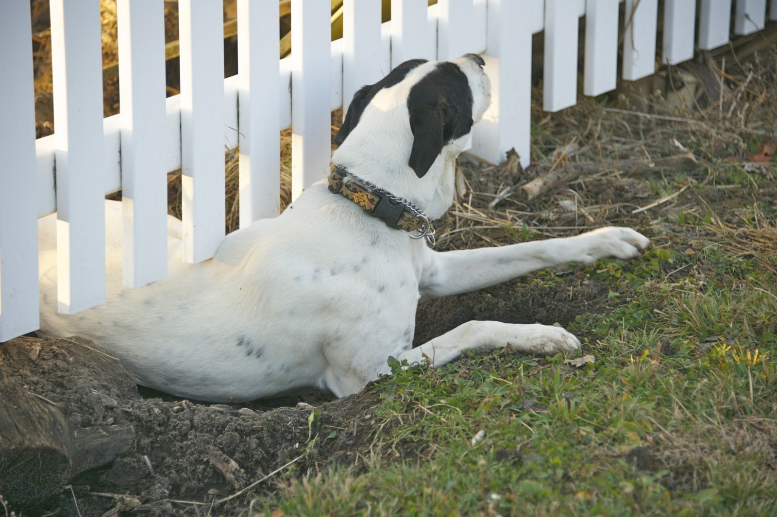 find out why your dog is escaping and how to stop it from