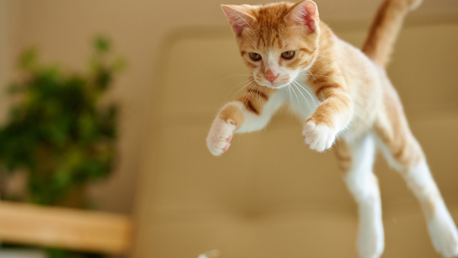 Why do Cats Suddenly Attack Their Owners?