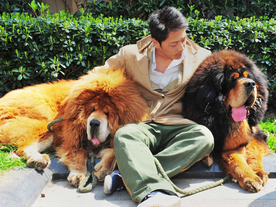 The Most Expensive Dog In The World
