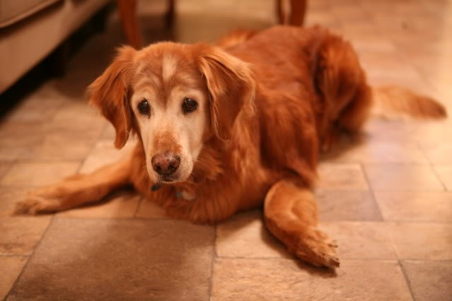 5 Perfect Products For Older Dogs