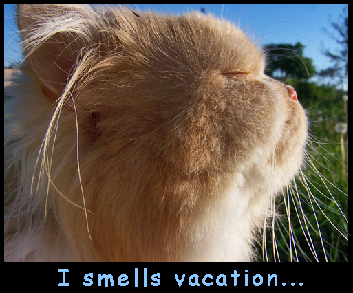 9 Tips For Taking Your Pet On Holiday