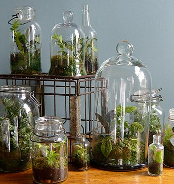 Terrarium Care