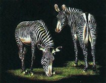 Zebras on black velvet