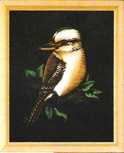 Kookaburra on black velvet