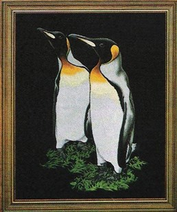 King Penguins on black velvet