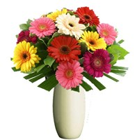 Gerberas, Bunches From $55