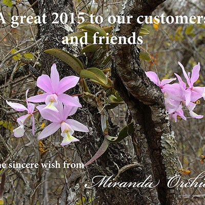 Happy 2015 from Miranda Orchids
