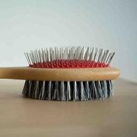 Pet brush with Bristle and metal pin