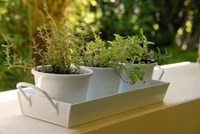 Set of 3 Pots with Tray