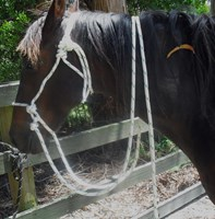 BITLESS BRIDLE  8MM HEAD WITH 12 MM REINS    PONY