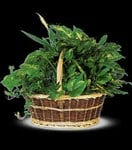 T212-1A Large Basket Garden