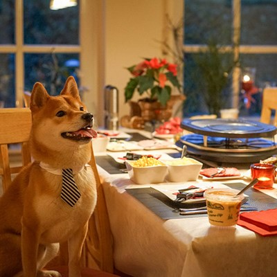 Teaching Your Dog Table Manners