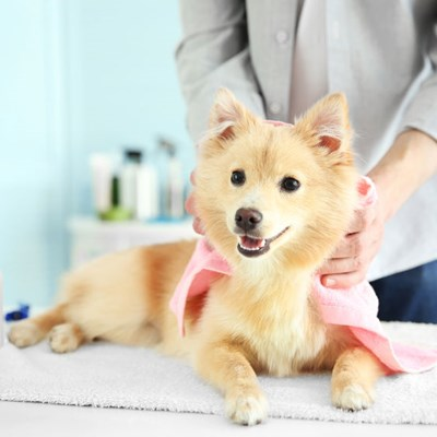 Are essential oil diffusers safe for dogs?