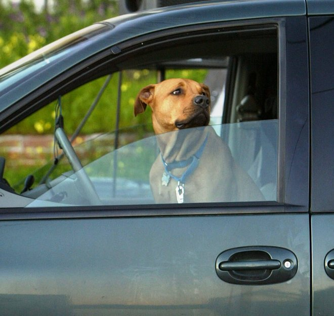 Safe Traveling Tips on Trips with Pets