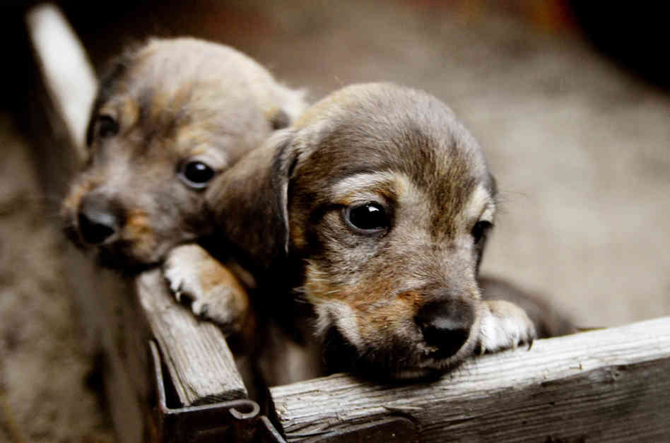 should your next dog be a shelter dog