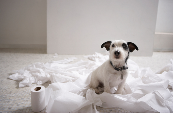 puppy potty four steps to successfully potty your