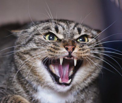 6 Reasons Why Your Cat Is Hissing