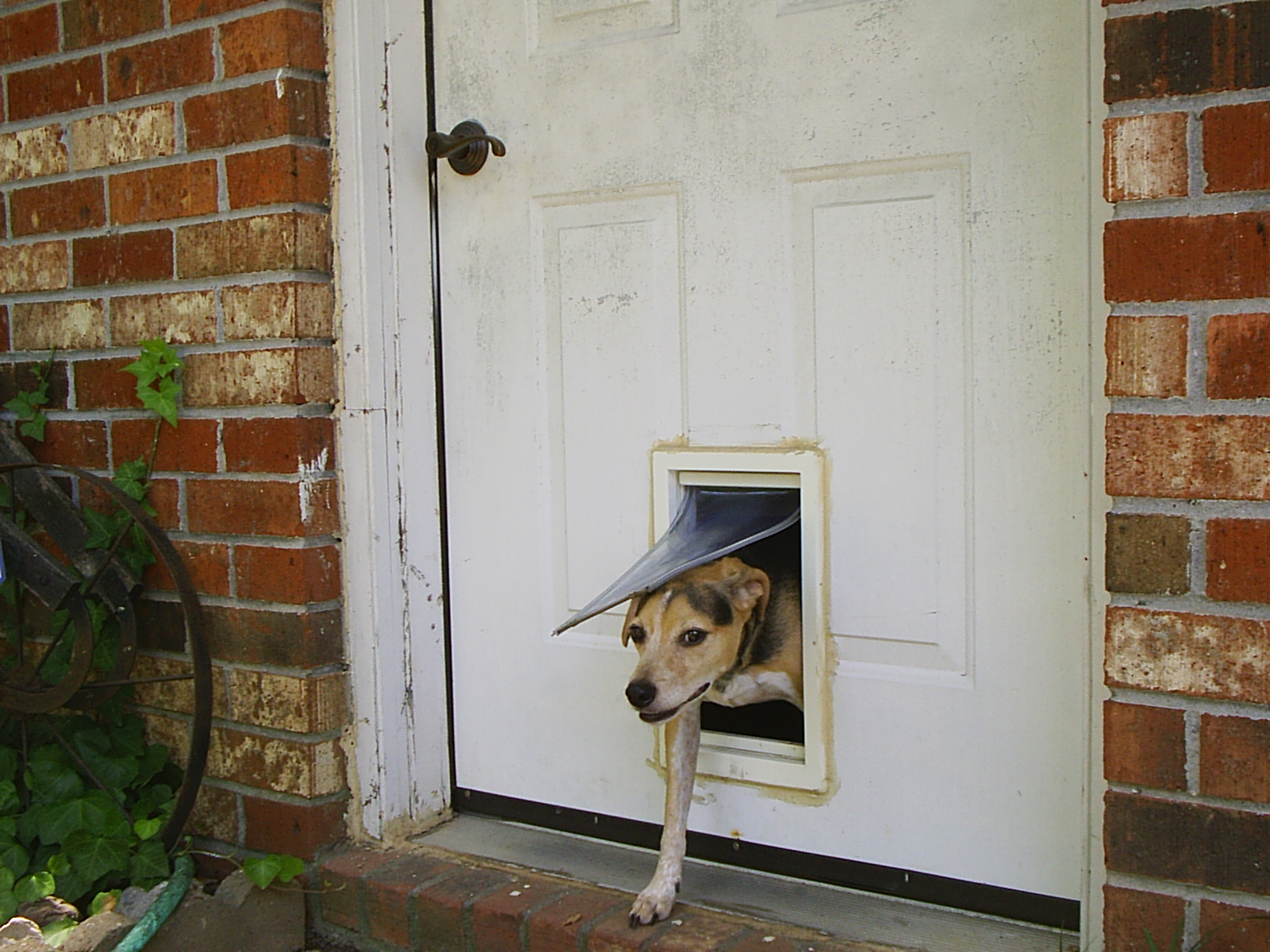 Things To Consider Before You Buy A Dog Door