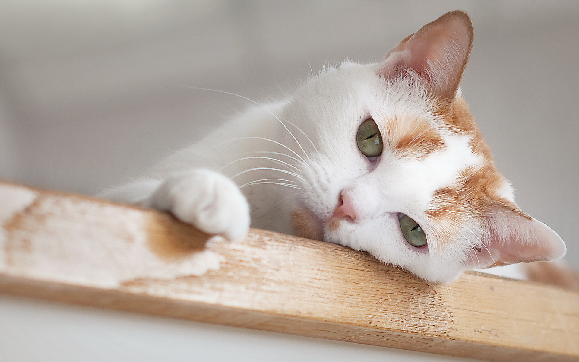 Colitis And Ibd In Cats