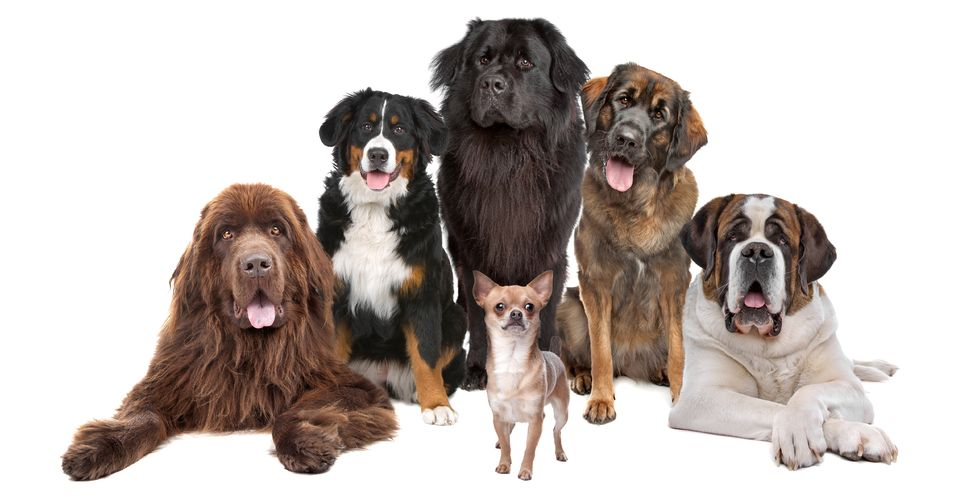 the wonderful benefits of pet ownership Animal attraction — pet ownership can bring emotional and health benefits  adoption is a wonderful way to bring a new pet into your family.