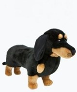 Shorty - Dachshund
